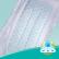 Pampers Baby Dry Maxi Plus Windeln 10-15 kg, Größe 4+ 1 Sparpack = 31 Windeln